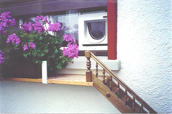 katze ist ungl cklich brauche tipps seite 2. Black Bedroom Furniture Sets. Home Design Ideas